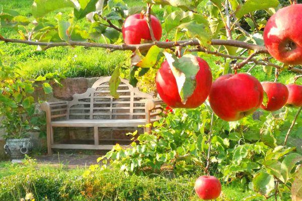 Apfelbaum in Wasungen